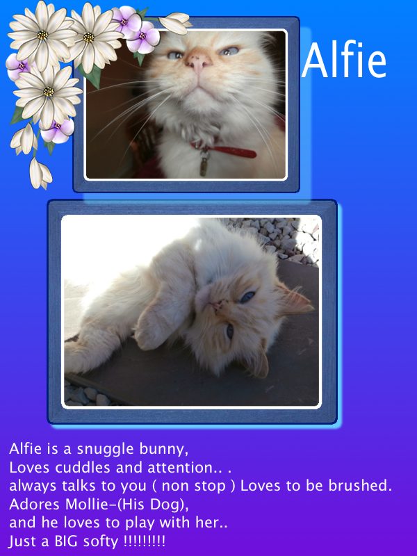Alfie !!!!xoxoxoxo