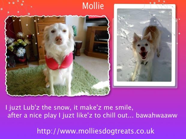 Mollie xo