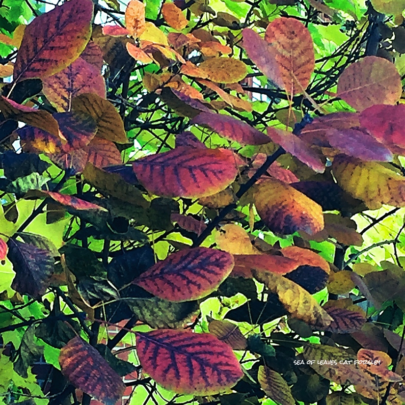 sea-of-leaves-cat-forsley