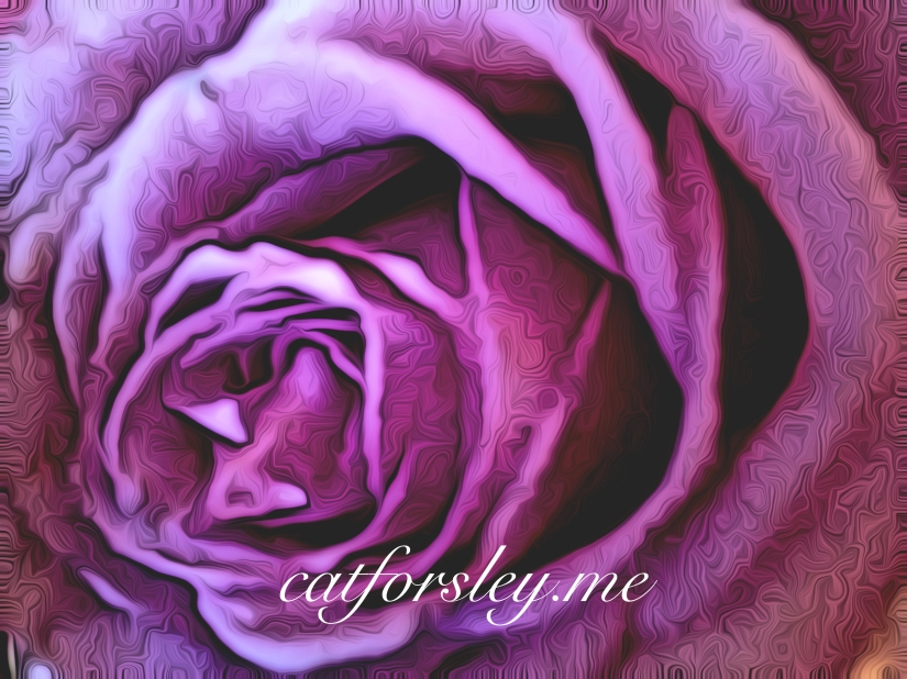 Inside the rose cat forsley ©