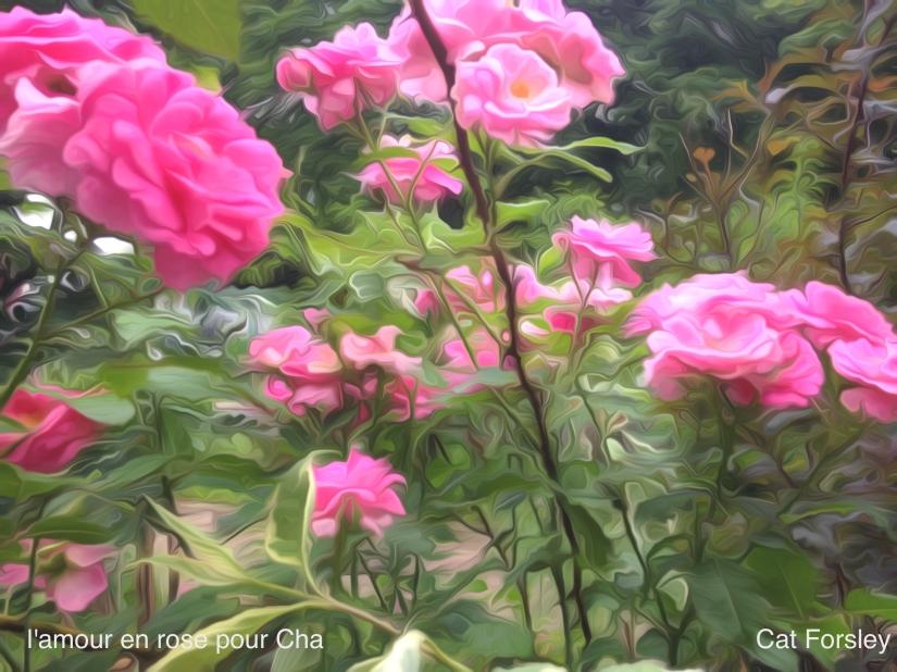 L'amour en rose Pour Cha Cat Forsley ©