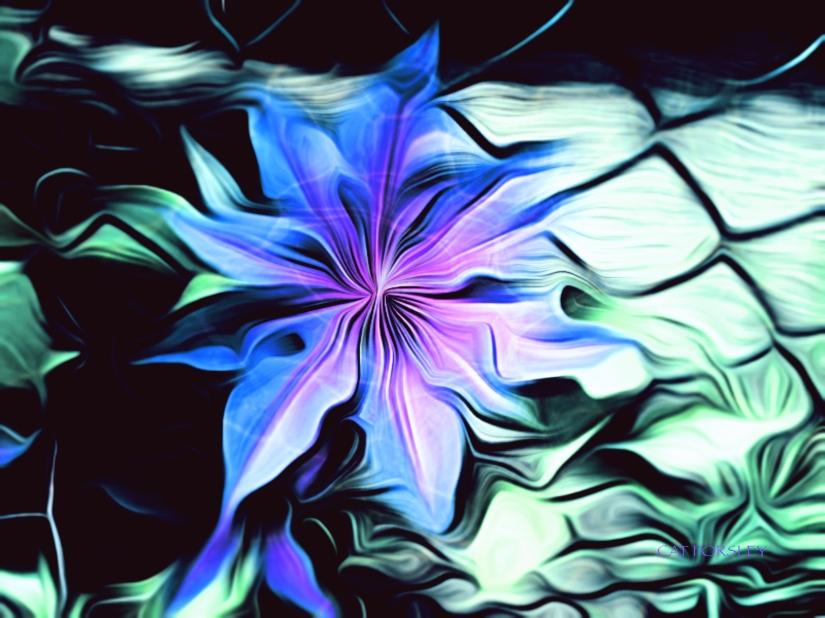 Aquatic Flower cat forsley ©